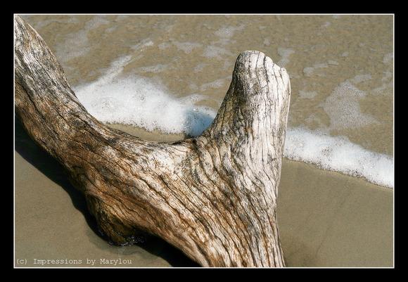 Jekyll Dunes 8.jpg